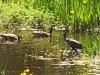 birds-lake